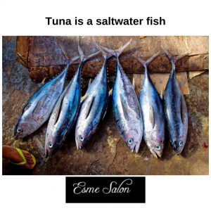 6 Fresh Tuna. It is a saltwater fish