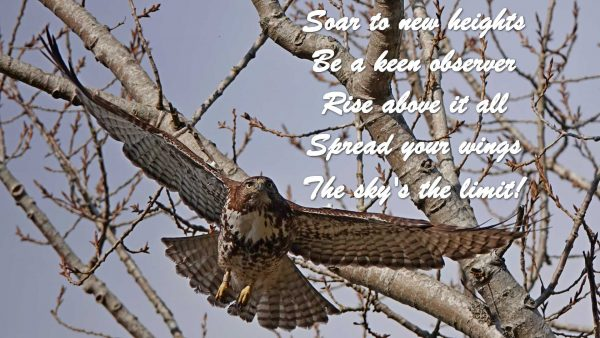 Soar to new heights, be a keen observer