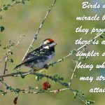 Birds are a miracle because they prove to us there is a finer, simpler state of being which we may strive to attain.