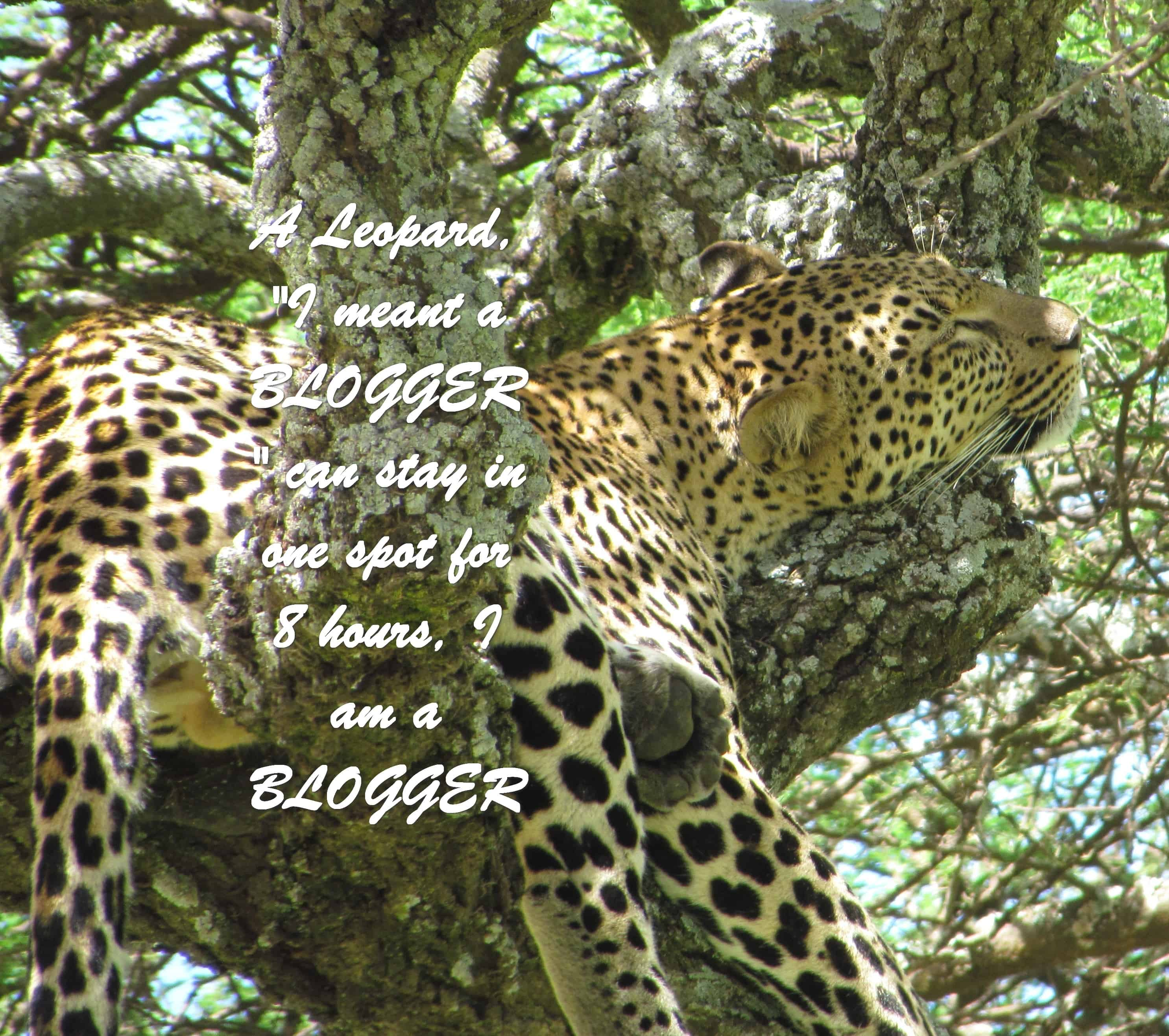 "A leopard ""I meant a BLOGGER"" can stay in one spot for 8 hours, I am a BLOGGER"