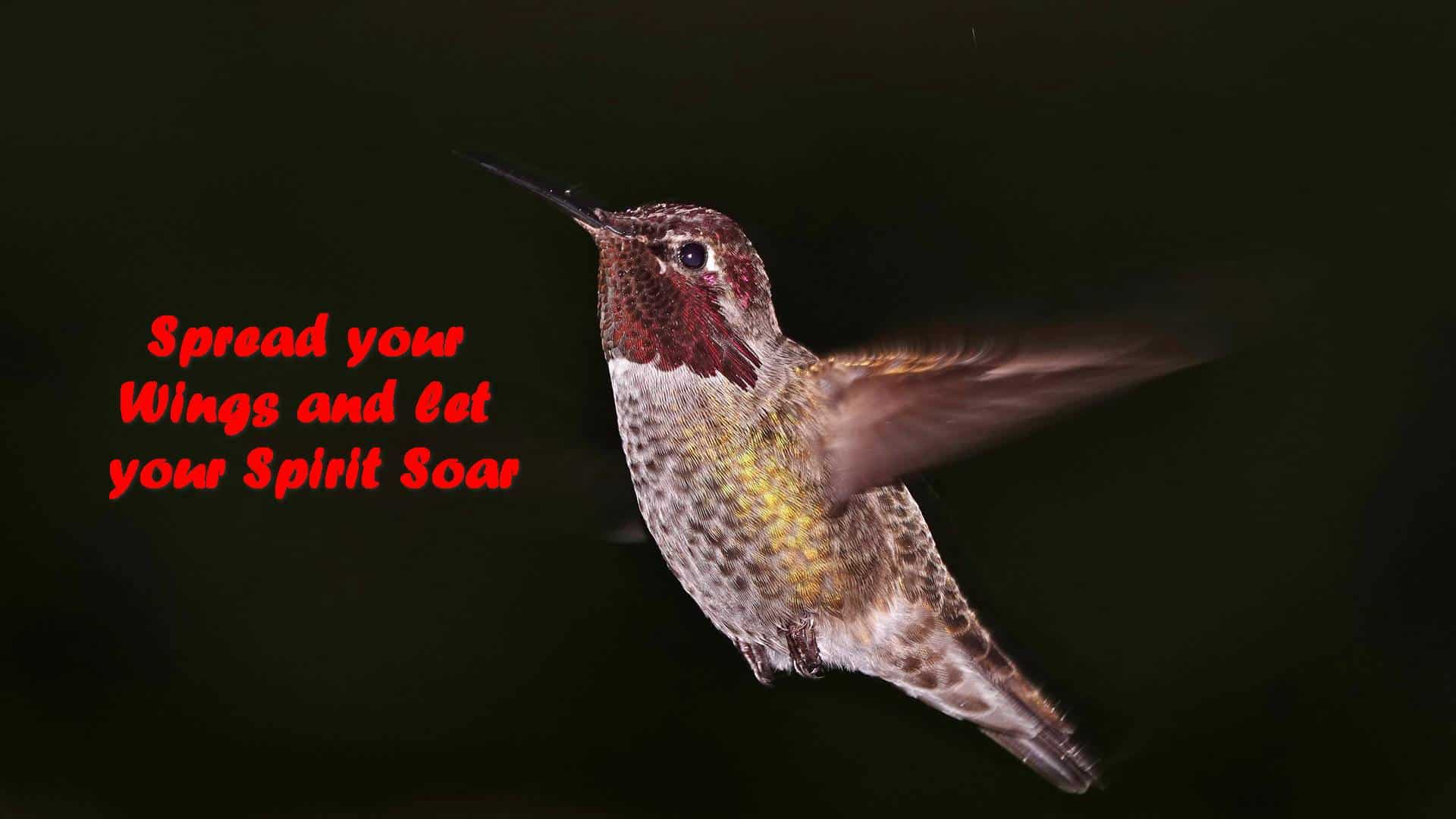 Spread your Wings and let your Spirit Soar