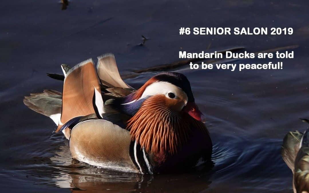 SENIOR SALON 2019 ROUNDUP: Feb 11-15, 2019