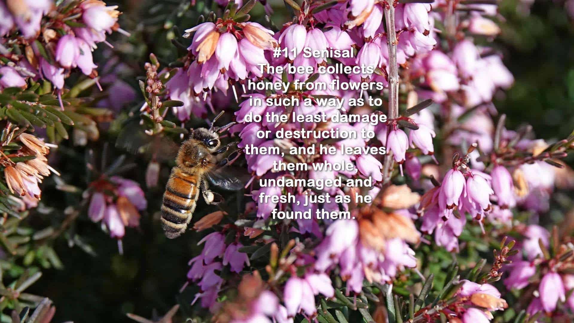 Bee in a pink flower bush