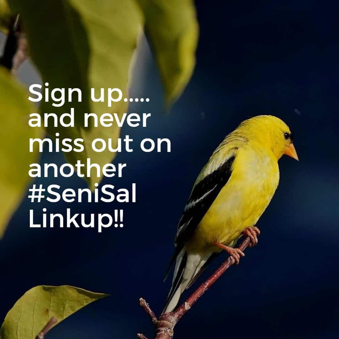 Yellow bird calling you to sign up for #Senisal Linkups