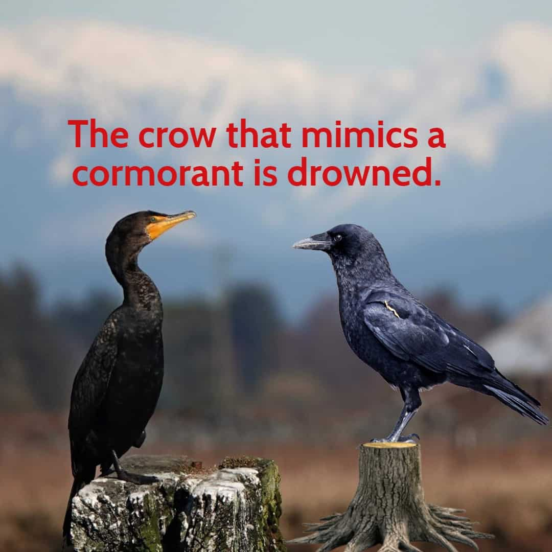 A Cormorant and Crow facing each other