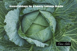 Green Cabbage for a hearty Cabbage Bredie
