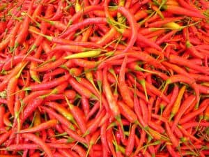 Long Red Chilies
