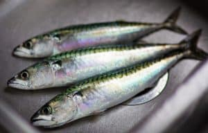 3 Herring on silver plate