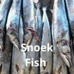 Fresh Snoek Fish
