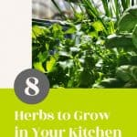 8 Easy to grow Herbs in Your Kitchen