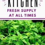 Lovely fresh herbs grown in your kitchen