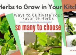 8 Herbs to Grow in Your Kitchen